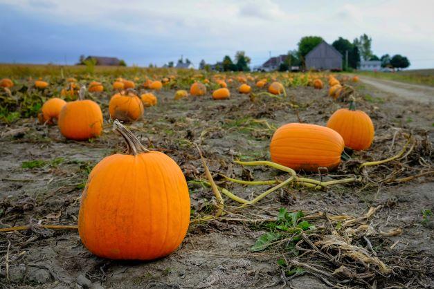 Oh, Great Pumpkin!